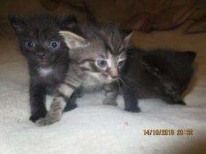 Отдам в добрые руки 3 маленьких котят
